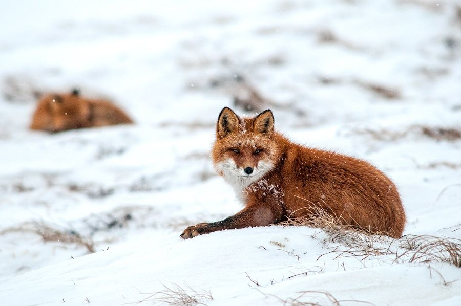 snowy morning in the tundra by Ivan Kislov on 500px