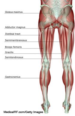24+ What is your hamstring ideas