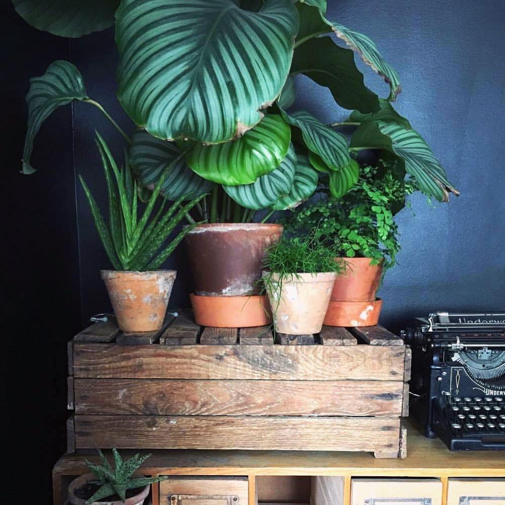 Plante D Intérieur A Faire Pousser Épinglé par habitat vivant sur plantes vertes d'intérieur