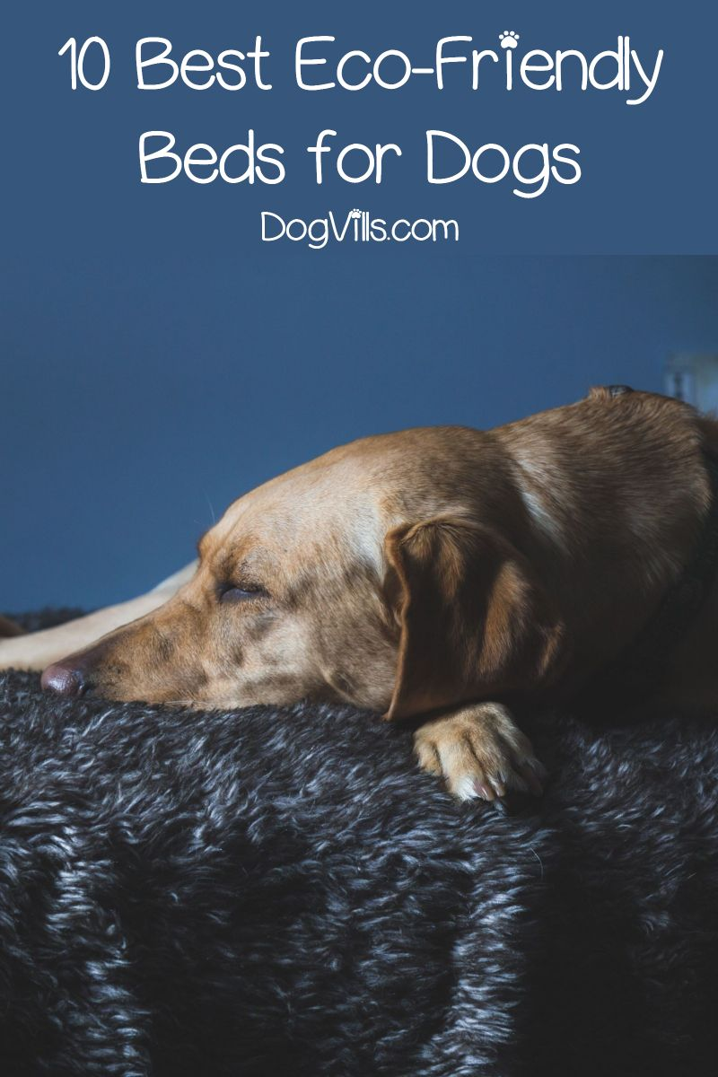 Top 10 Eco Friendly Dog Beds With Reviews Dog Friends Dogs