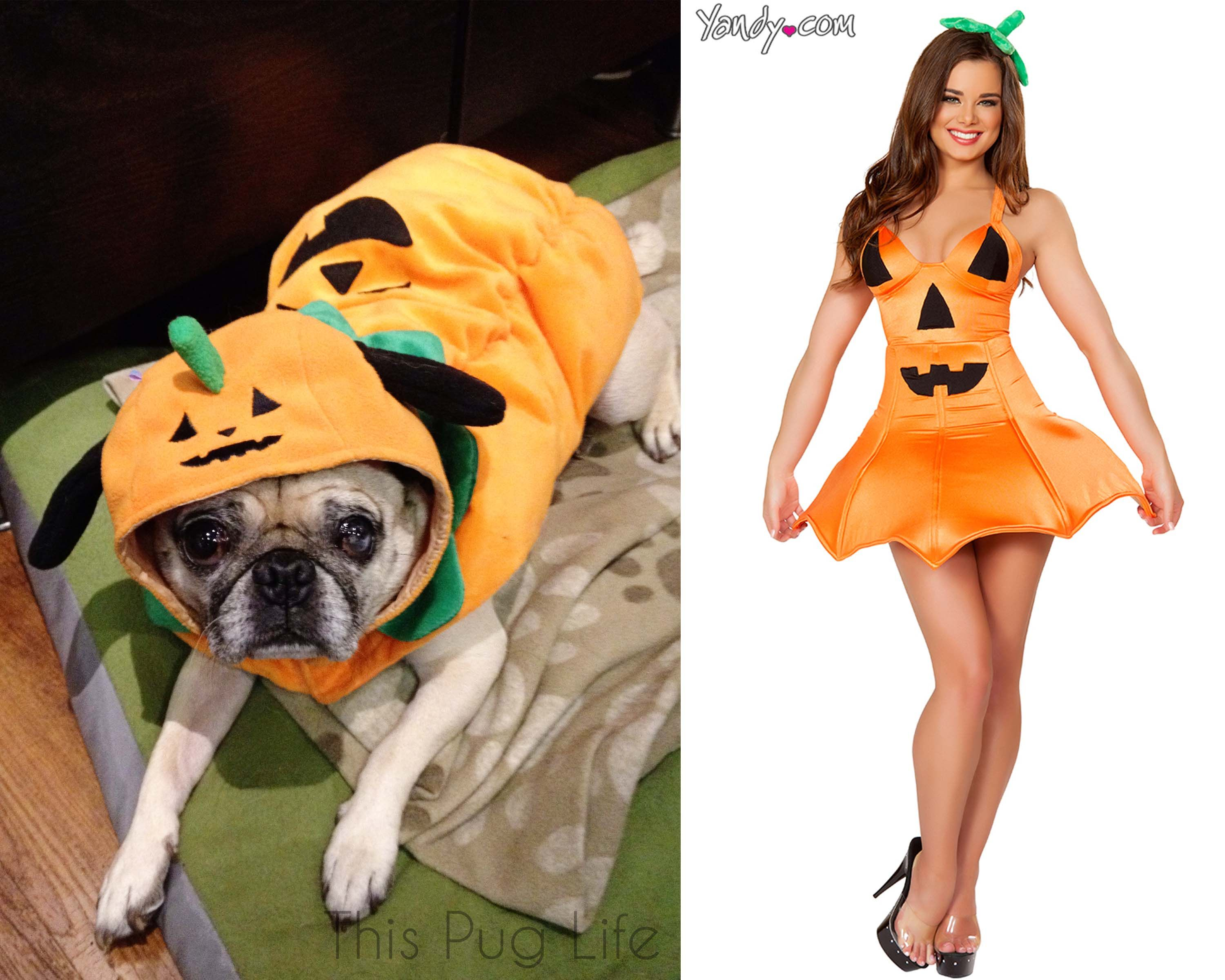 Who Wore It Best  Pug Costumes vs. Sexy Costume from ThisPugLife  sc 1 st  Pinterest & Who Wore It Best? Pug Costumes vs. Sexy Costumes   Pug costume Pug ...