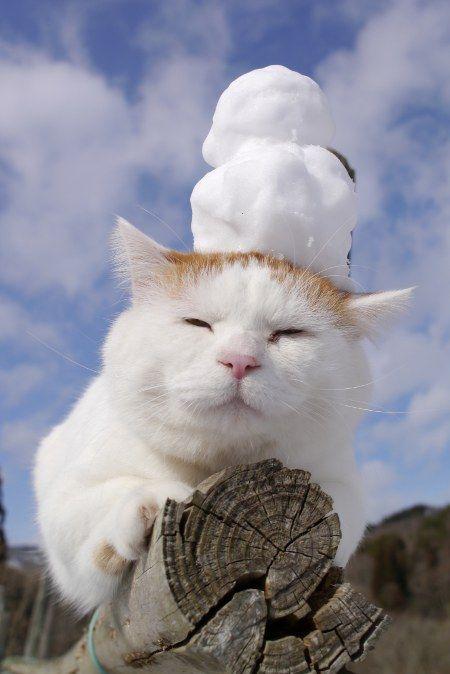 Shironeko needs a little snow man on his head!