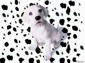 Dalmatian Puppies For Sale In Indiana Cute Baby Animals