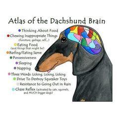 dachshund memes - Google Search