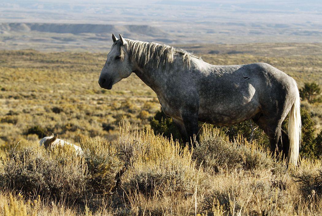 Sand Wash Basin stallion