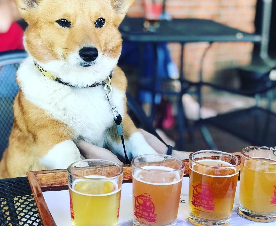 It's always yappy hour in Pensacola! ExperiencePcola