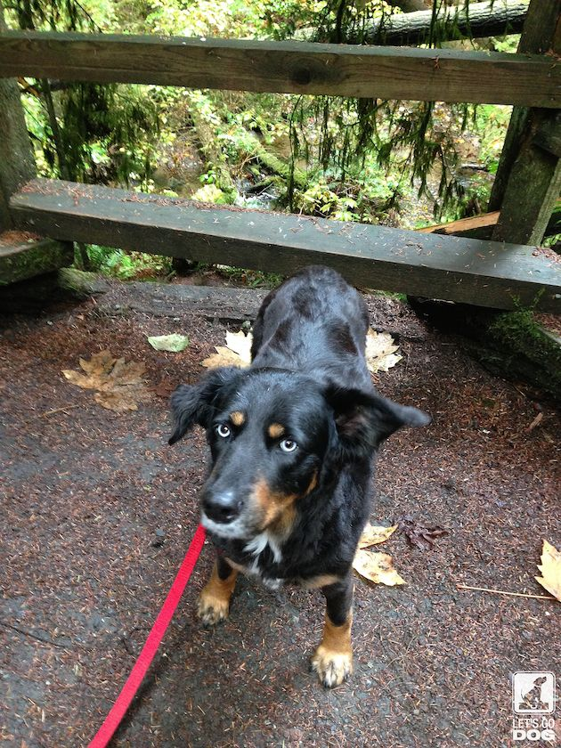 Peabody Creek Trail in Port Angeles is Pet Friendly! Click