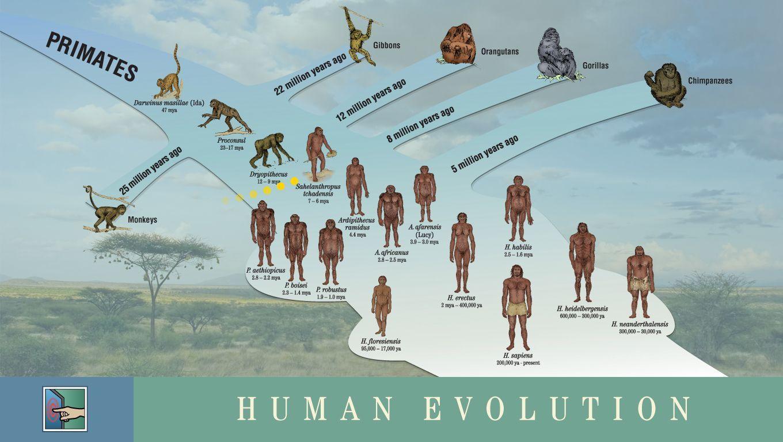Ken Hokes Human Evolution Timeline