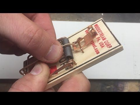 How to Set a Victor Mouse Trap