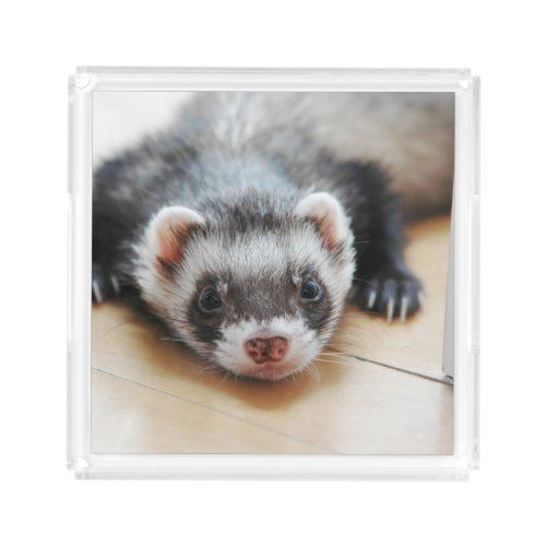 Sable Ferret Acrylic Tray Zazzle Com Pet Ferret Ferret Cute Ferrets