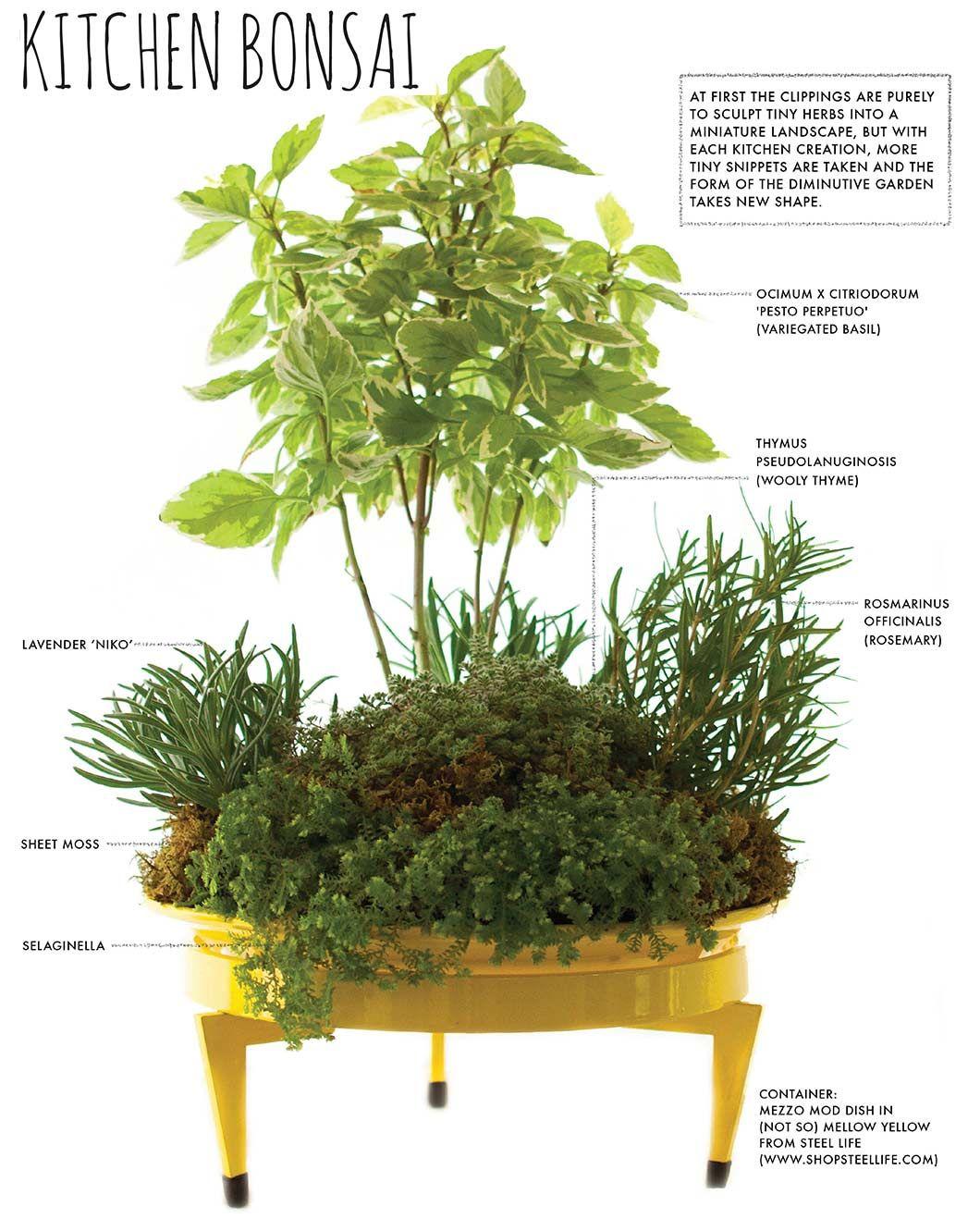 Make A Countertop Kitchen Bonsai Herb Garden Bonsai Container