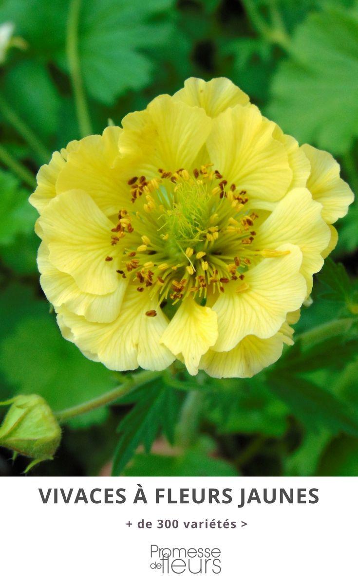 que votre jardin soit l 39 ombre ou au soleil les plantes vivaces fleurs jaunes clairent et. Black Bedroom Furniture Sets. Home Design Ideas