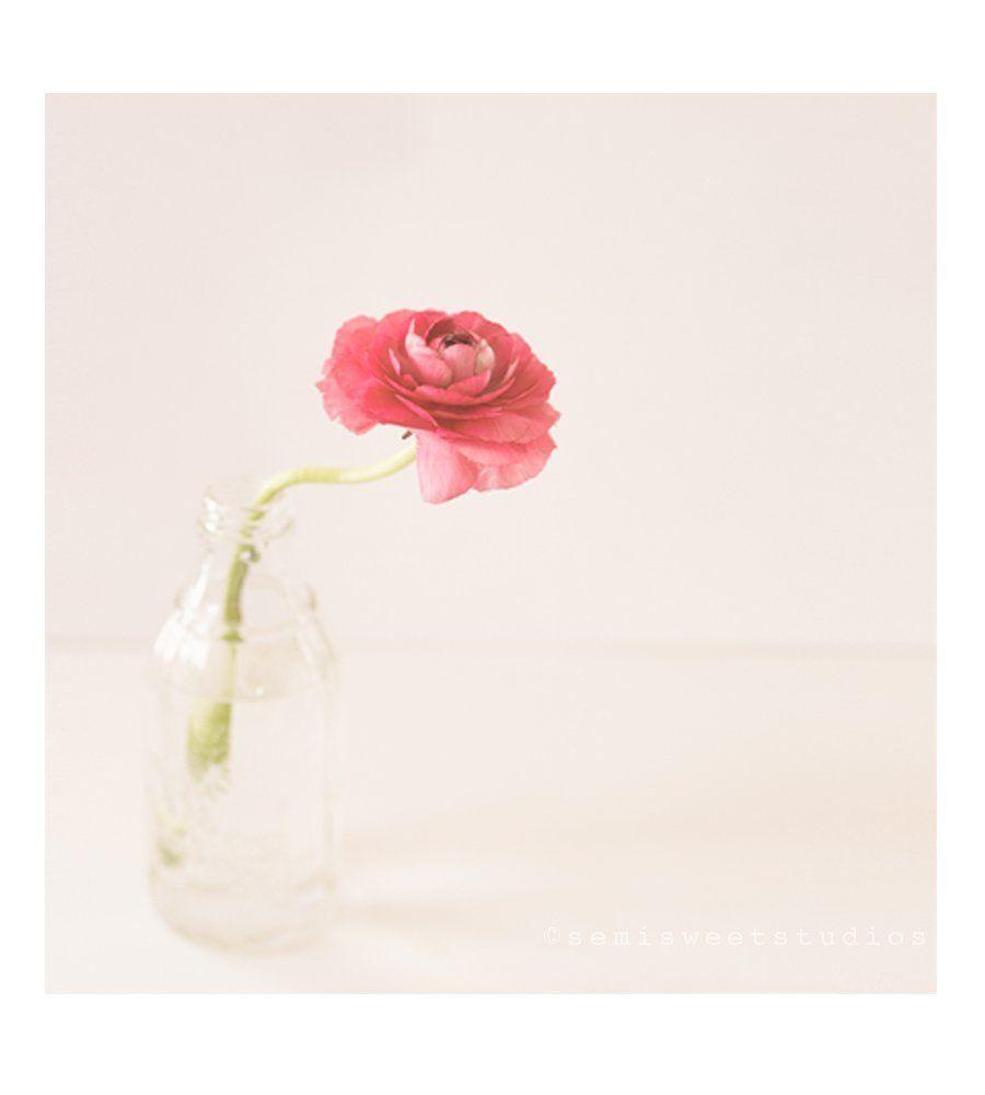 Single Pink Flower Photo Modern Still Life Print Pretty