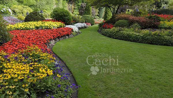 Doña Cachi Jardinería Cachi Jadinería - Inicio