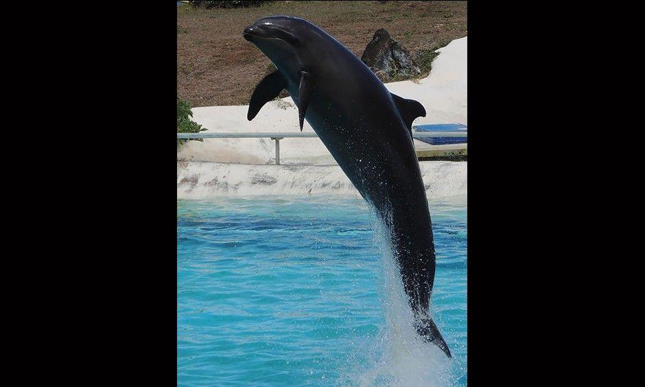 No creerás que estos híbridos de animales existen   FOTOS   Noticias del Perú   LaRepublica.pe