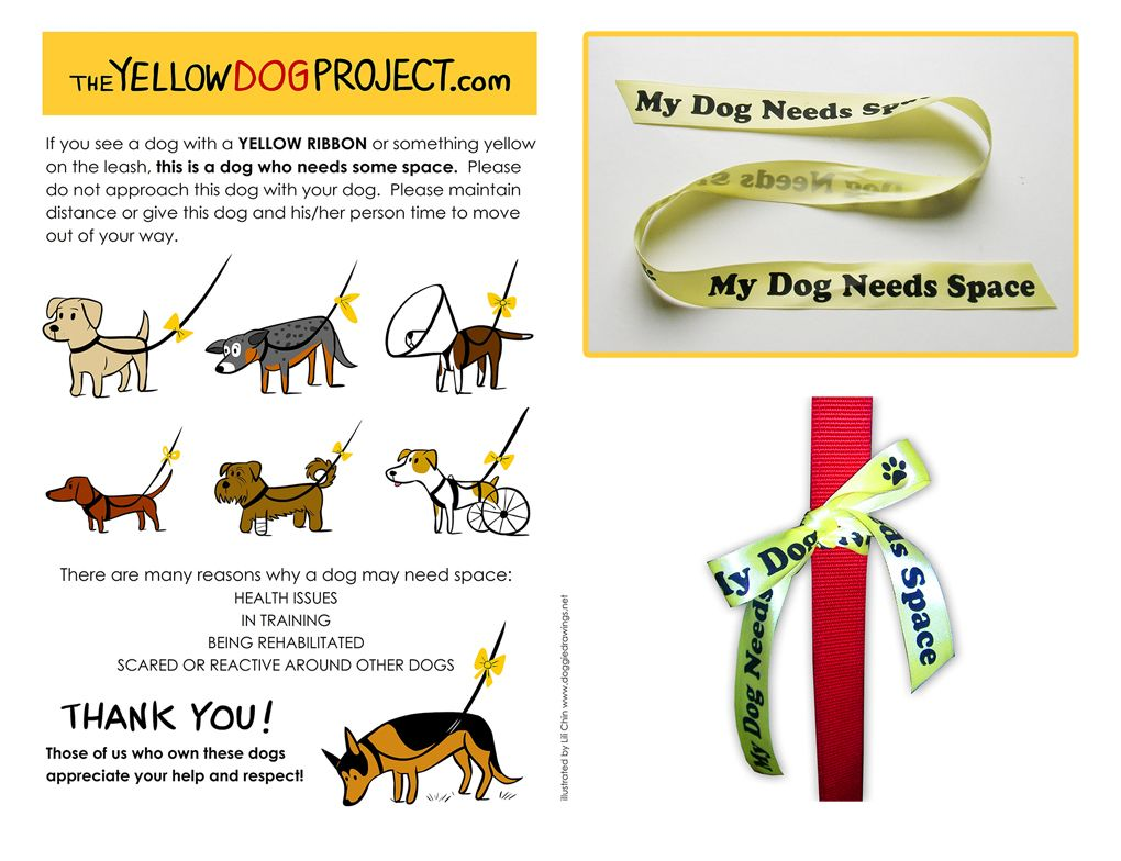 Yellow Leash Ribbon