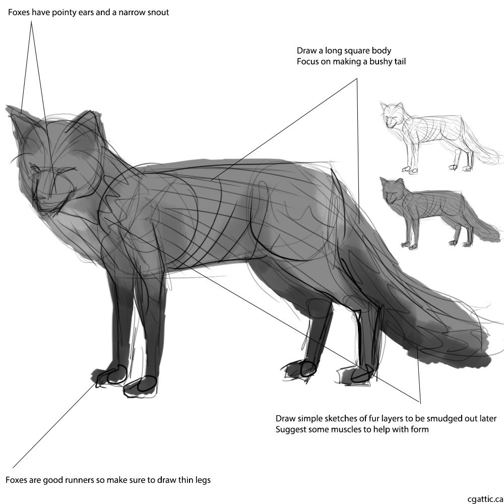 Fox Face Line Drawing : Creating a realistic fox drawing step by