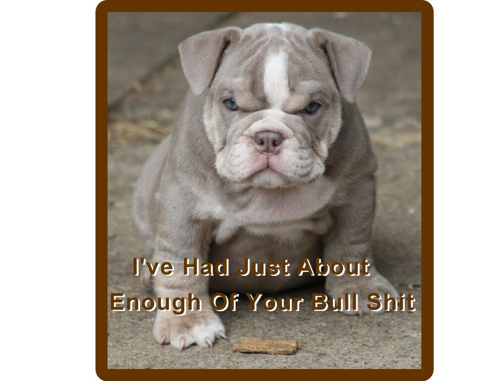 Details About Funny English Bull Dog Puppy Refrigerator Tool Box