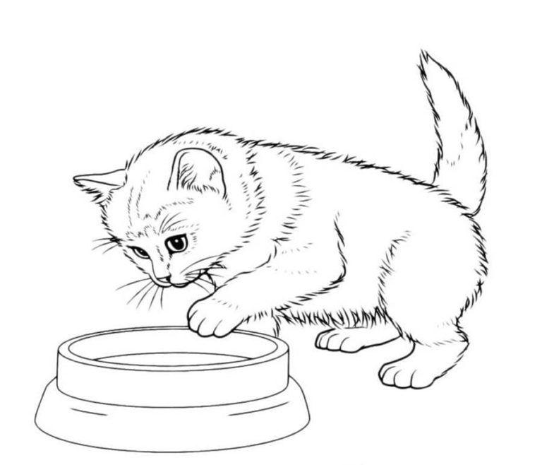 Katzen Ausmalbilder Ausmalbilder Kinder Fur Malvorlagen Ausmalbilder Katzen Katze Zum Ausmalen Ausmalbilder
