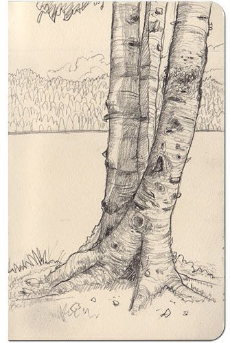 How can I draw such amazing tree bark? I want to learn.