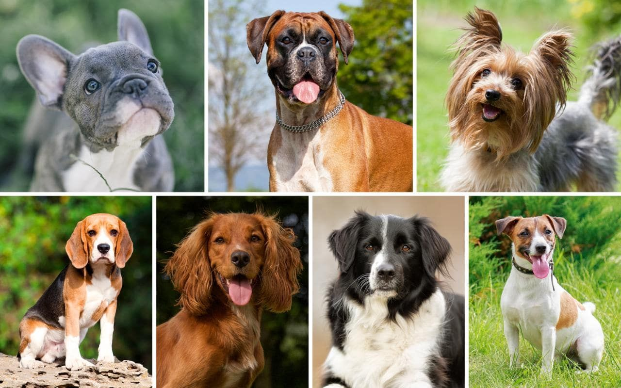 Pin By Elena Bluemoon On Dogs Man S Best Friend Dog Breeds Types Of Dogs Best Dog Breeds