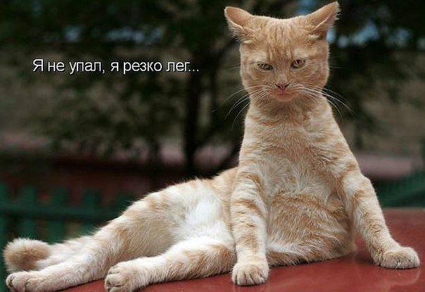 @дневники — Без кота и жизнь не та ツ