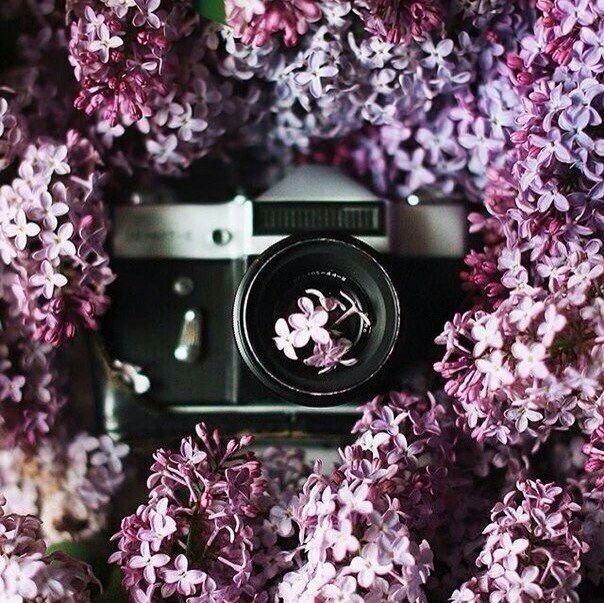 Фотоаппарат в сирени | Сирень, Фотосъемка, Фотографии