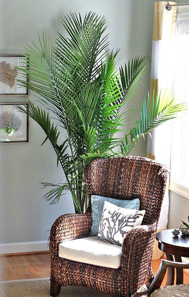 Top 10 Places For Large Houseplants Tropical Home Decor