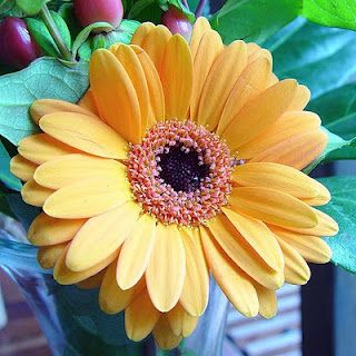 The Added Benefits Of Valentine S Day Flowers Indoor Flowering Plants Beautiful Flowers Flowers