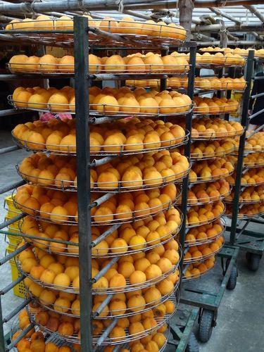 柿子黃了~味衛佳柿餅,日勝飲食店 @ 最愛北海道~ :: 隨意窩 Xuite日誌