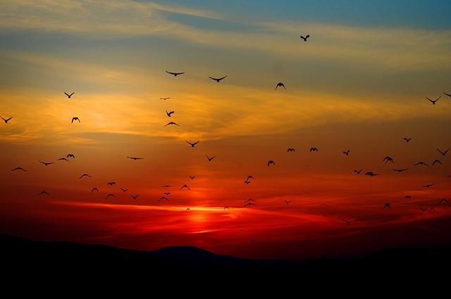 Pin By Aubrey Jonsson On Lp Moodboard Birds Flying Birds Black Bird