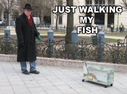 I wanna take my fish for walks...