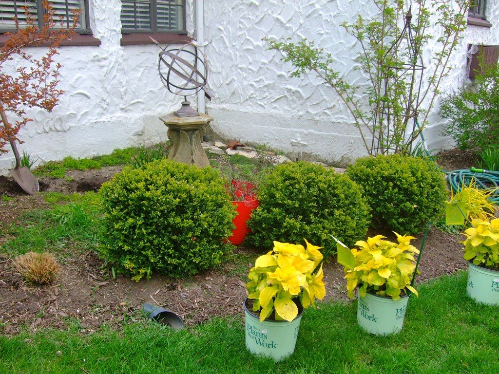 Lemon daddy hydrangea front yard landscape pinterest for Front yard landscaping plants and shrubs