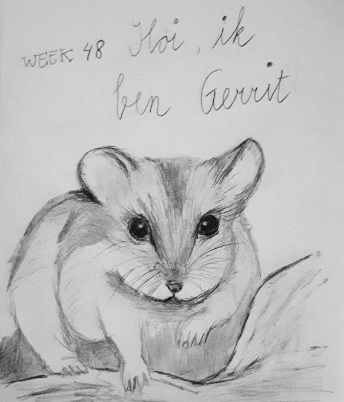 Week 48 Ik Ben Gerrit Potloodtekening Drawing Hamster Potloodtekeningen Dingen Om Te Tekenen Drawing