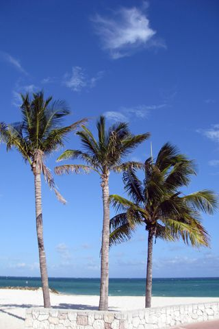 Pin by melody bray on iphone wallpaper backgrounds palm tree iphone wallpaper iphone - Palm tree wallpaper for android ...