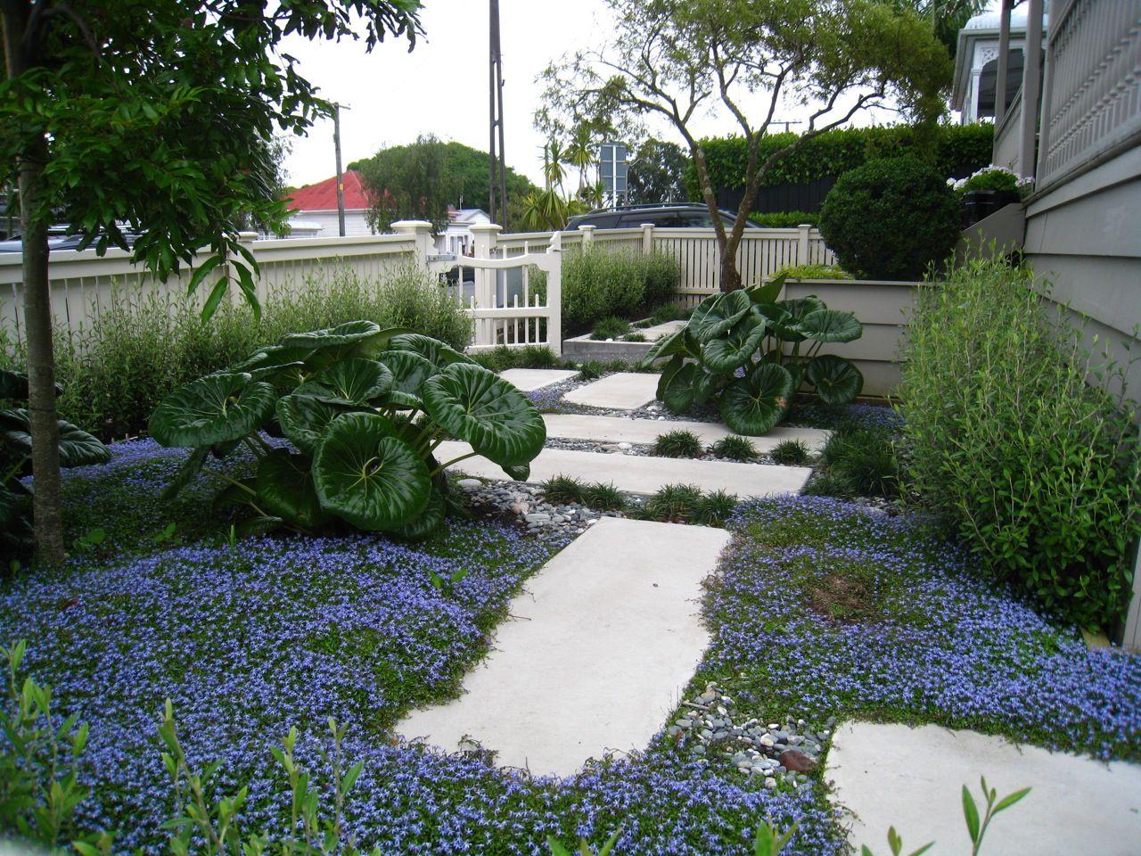 Auckland Landscape Designer, Kirsten Sach Landscape Design