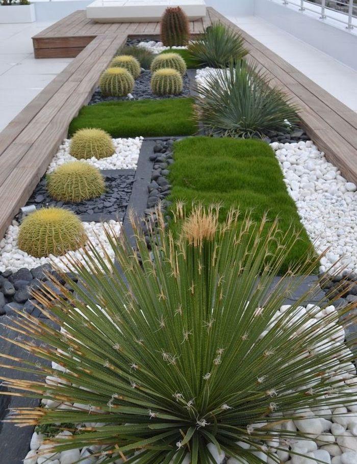 plantes grasses deco de jardin en longueur cactus verts sur parterre de cailloux et galets blancs e noirs
