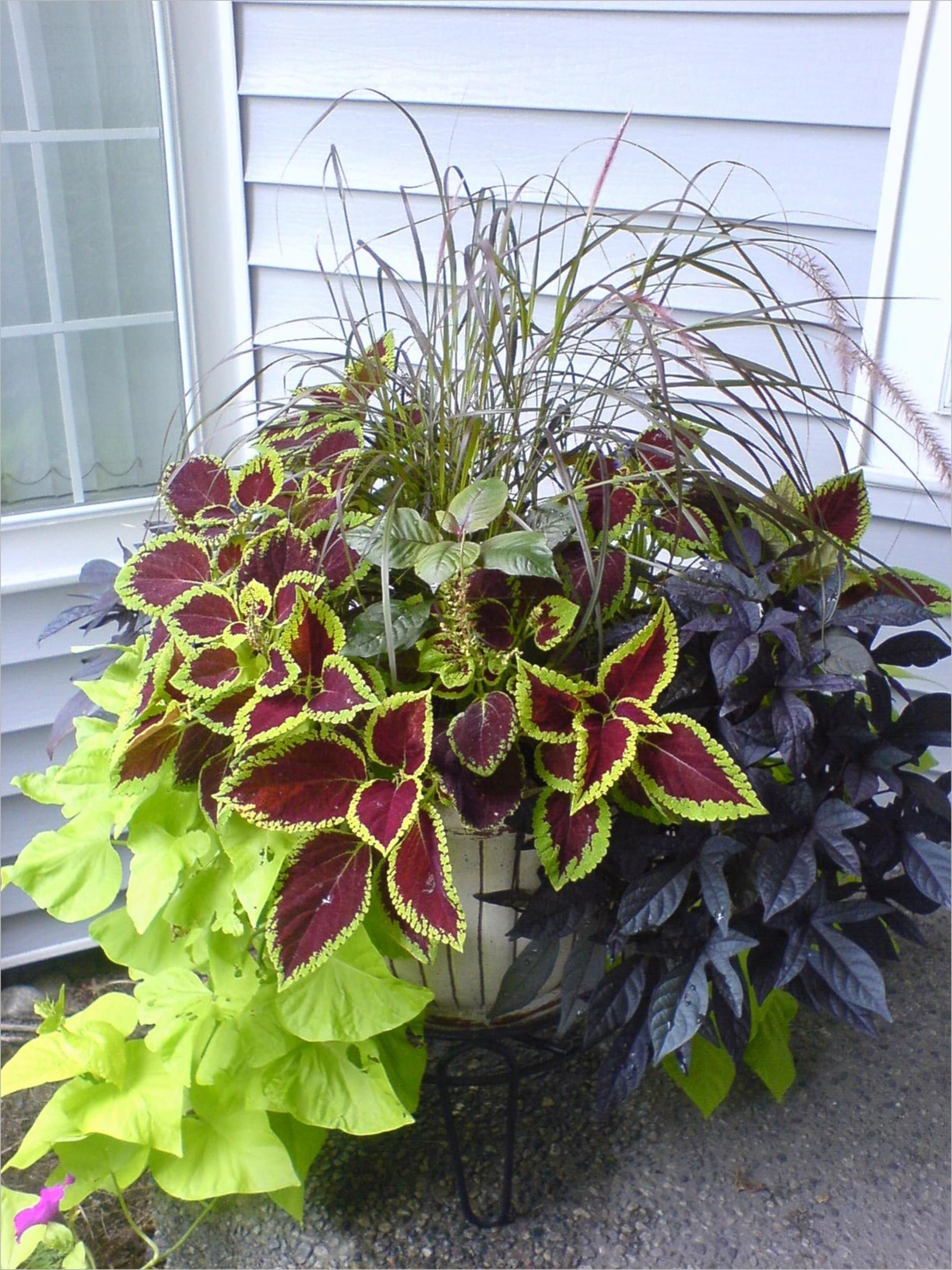 1f3ef77a71d60a2f833e3048b0290be1 - Vegetable Combination Ideas For Container Gardens