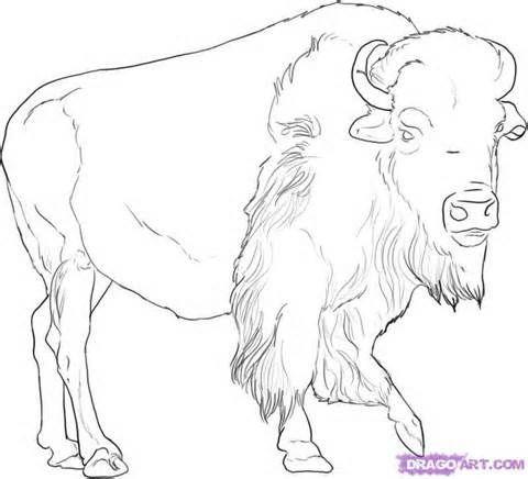 Pin By Sergey Paramonov On Animals Patterns Buffalo Pictures Buffalo Art Buffalo Painting