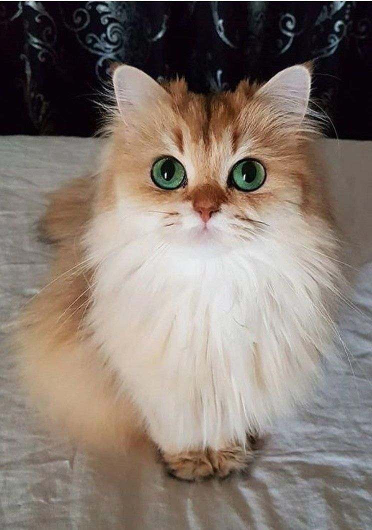 These Adorable Cats Will Make You Happy Cats Are Fascinating