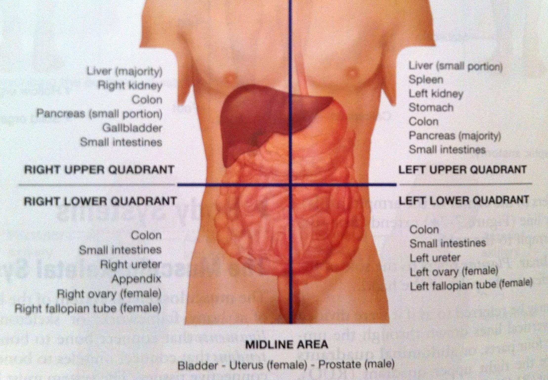 Abdominal Quadrants And Organs Diagram Wiring Diagram