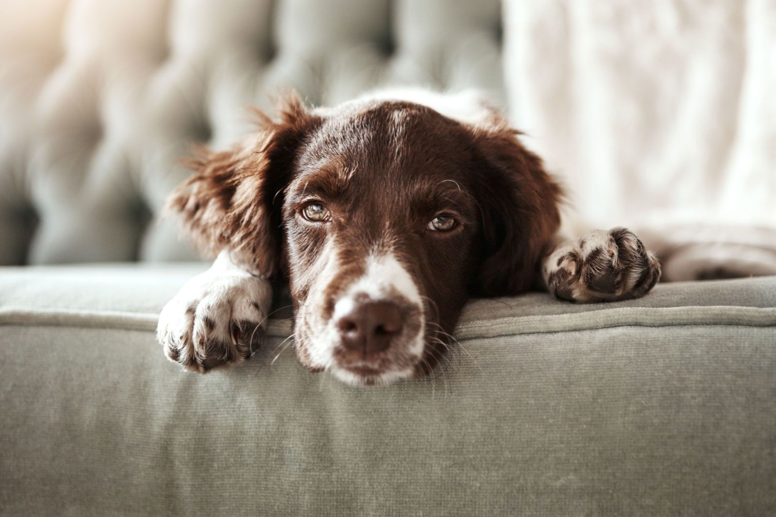 6 things to consider before bringing home a pet pet hair