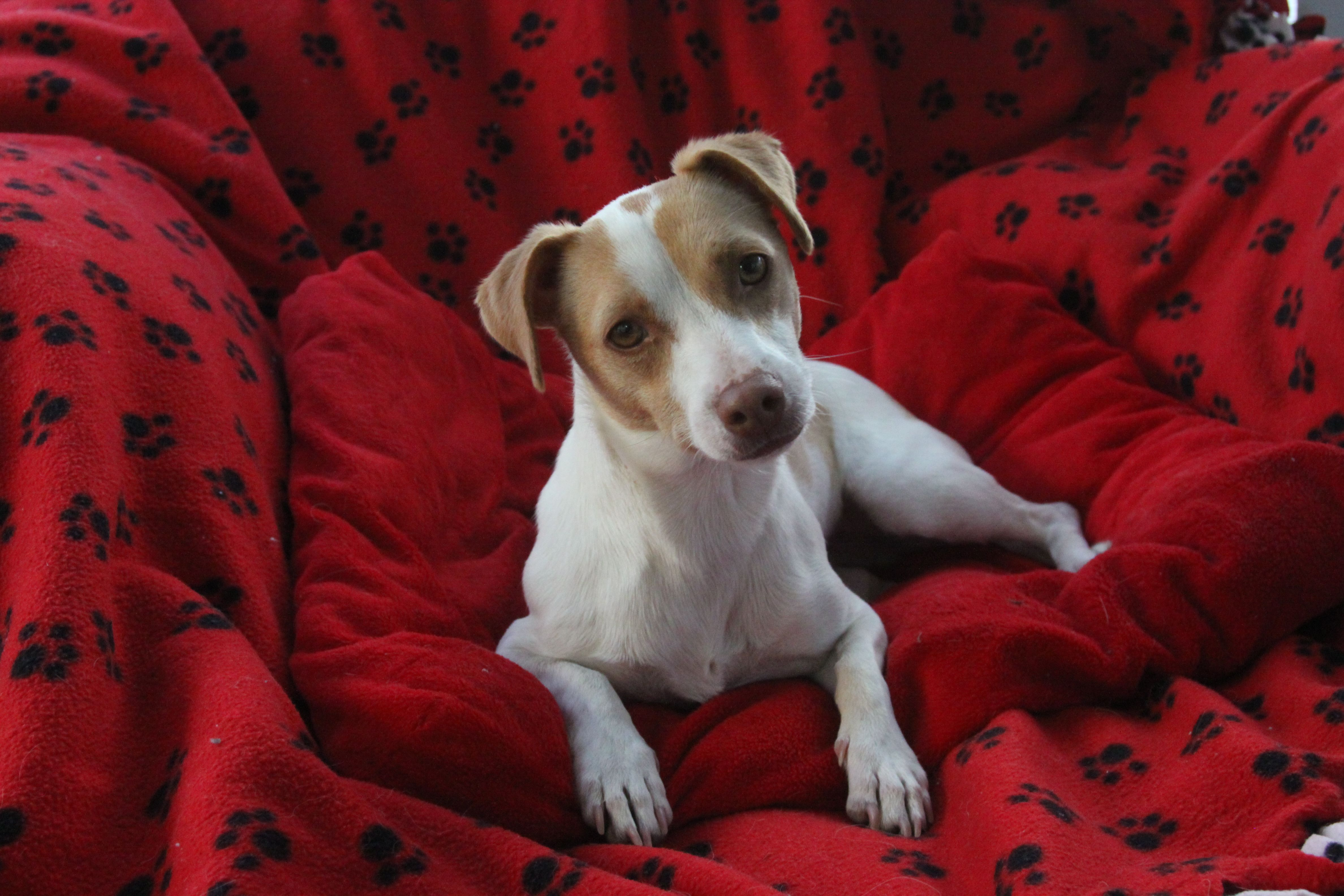 libby is available for adoption on oct 20th 2013 at lucky pup dog