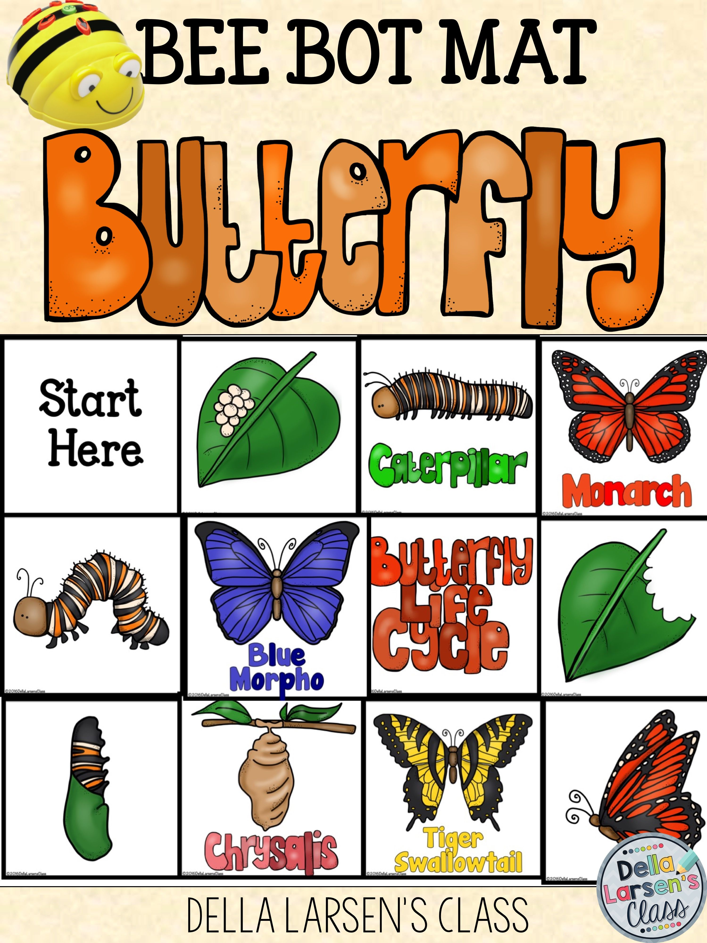 Bee Bot Butterfly Life Cycle