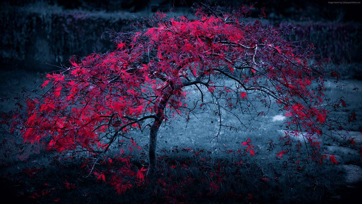 30 Super Cool Backgrounds For Your Screens Landscape Wallpaper Tree Wallpaper Nature Wallpaper