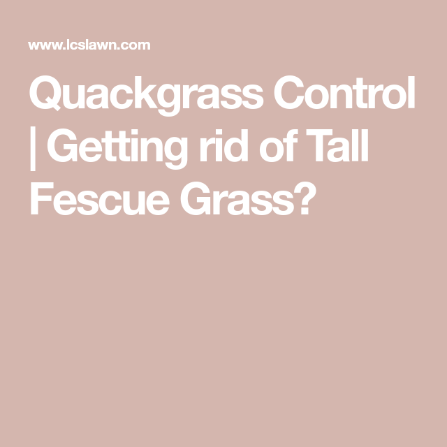 Quackgrass Control Tall Fescue Fescue Fescue Grass