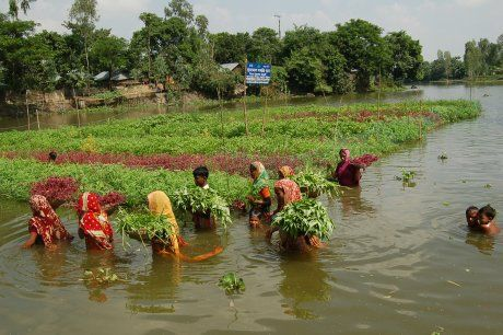 floating gardens, Bangladesh | Garden design, Floating garden, Eco friendly  garden