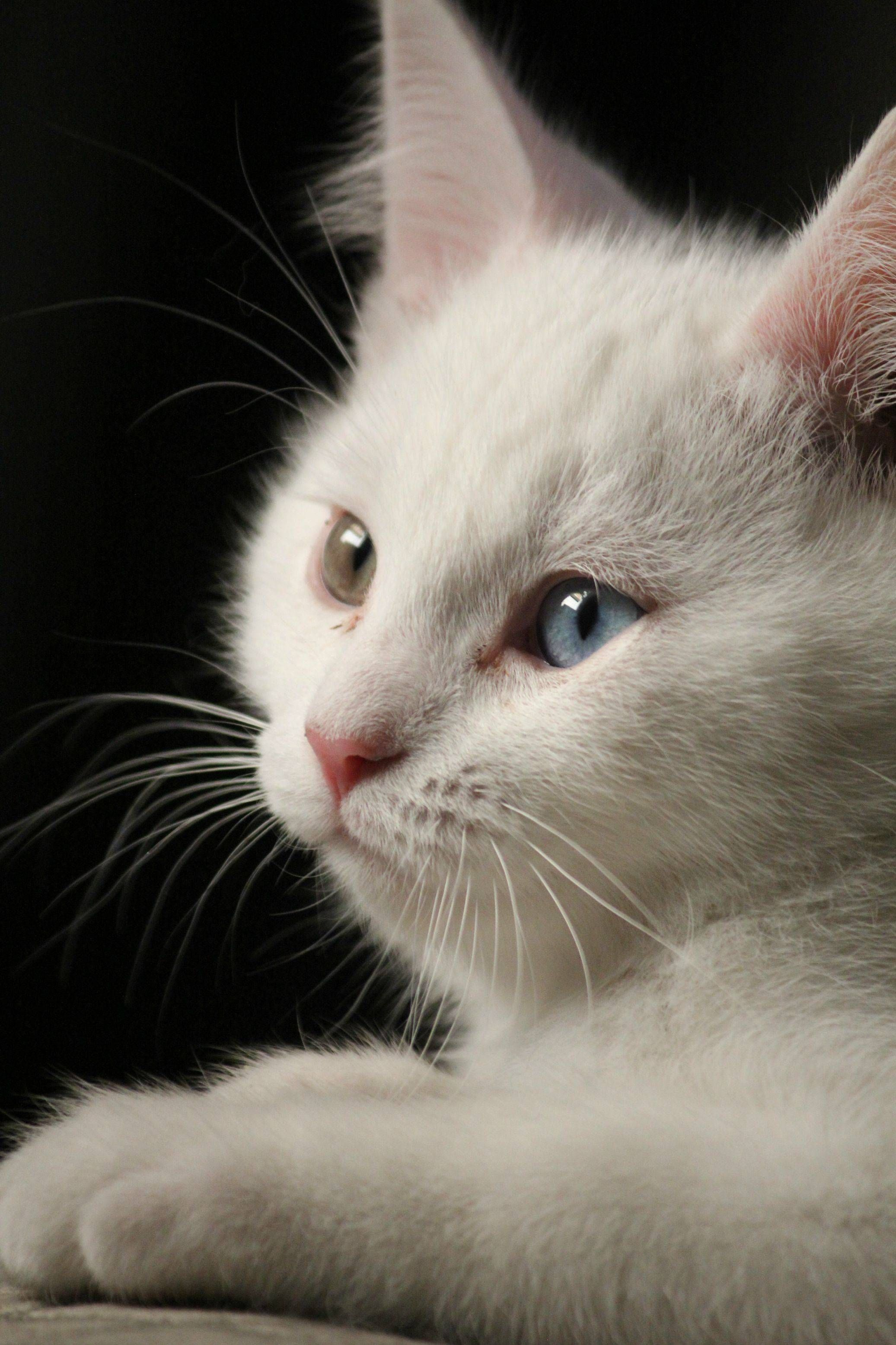 Color cats like - Animals Have The Most Expressive Eyes Especially When They Are Bi Color