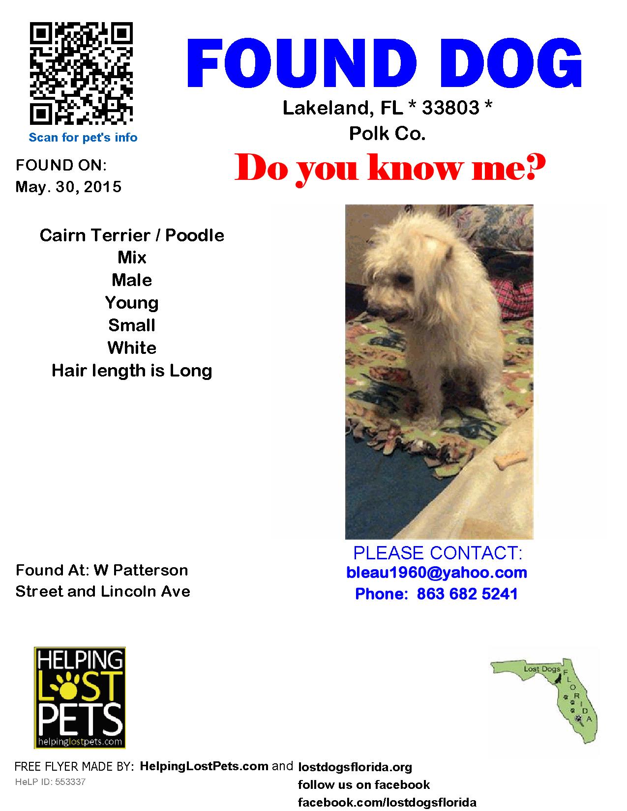 Found Dog Cairn Terrier Lakeland Fl United States Terrier Poodle Mix Lakeland Cairn Terrier