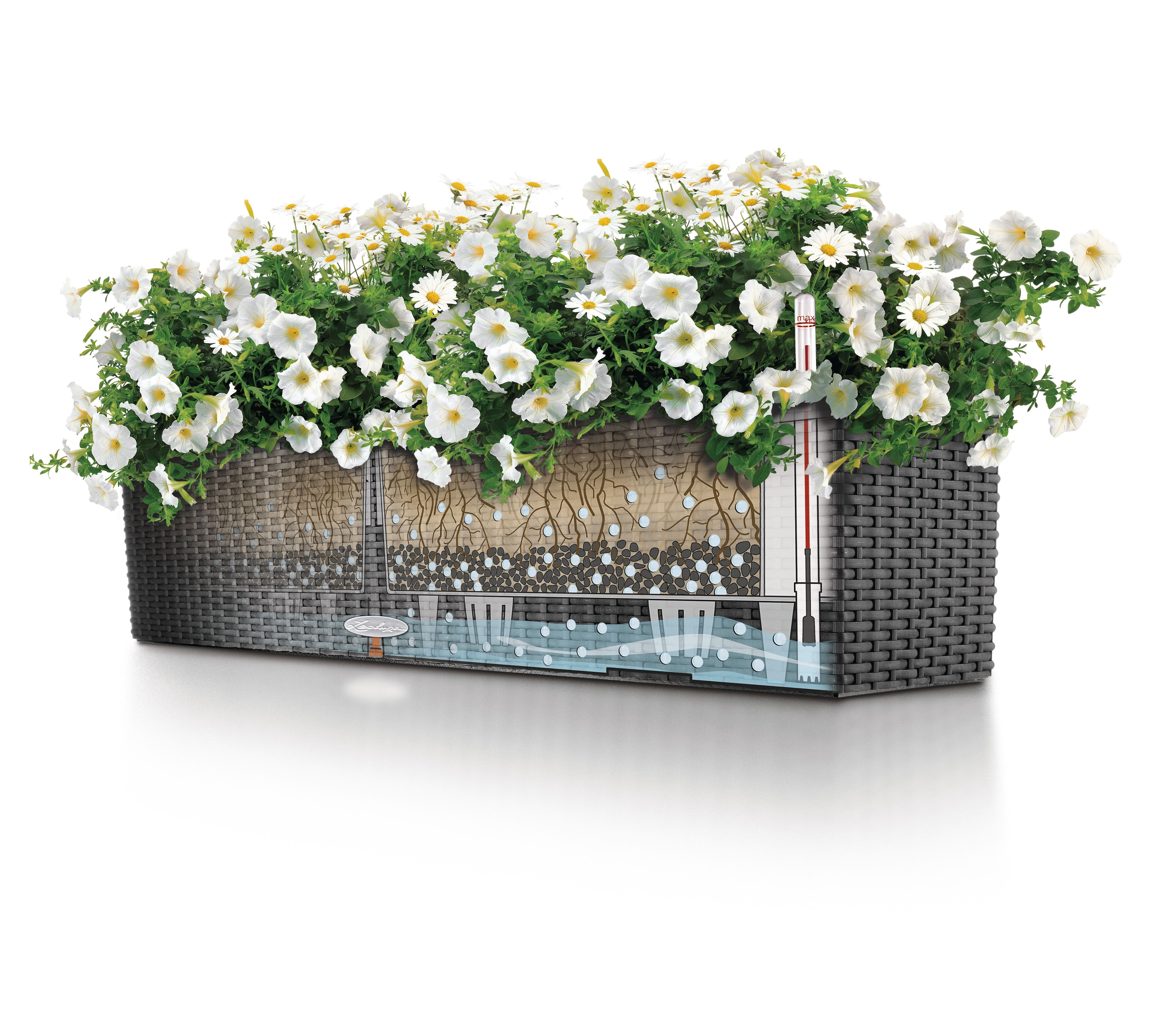 Blumenkästen Mit Wasserspeicher Lechuza Pin By Gover Horticulture On Lechuza Planters Lechuza Flower Boxes